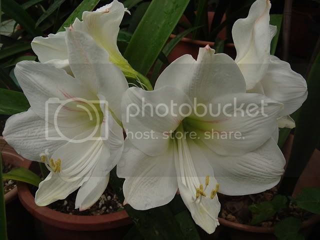 亂亂種的花園 DSC05157