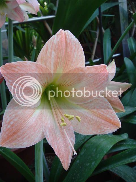 亂亂種的花園 DSC05348