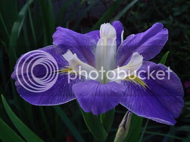 亂亂種的花園 DSC05476