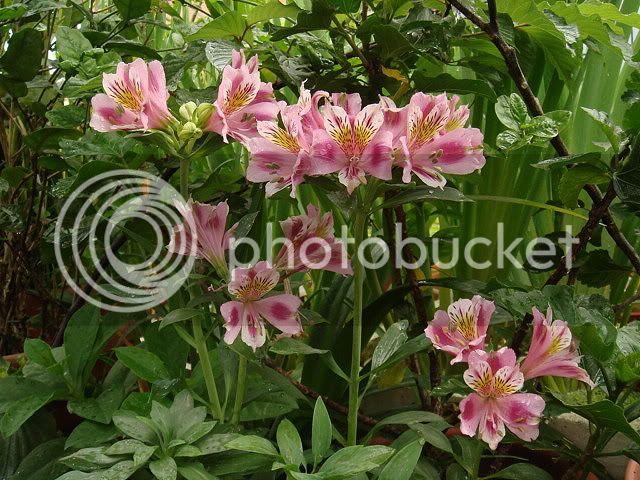 亂亂種的花園 DSC06112