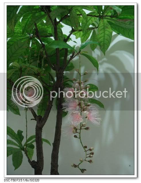 亂亂種的花園 - 頁 3 DSC03300
