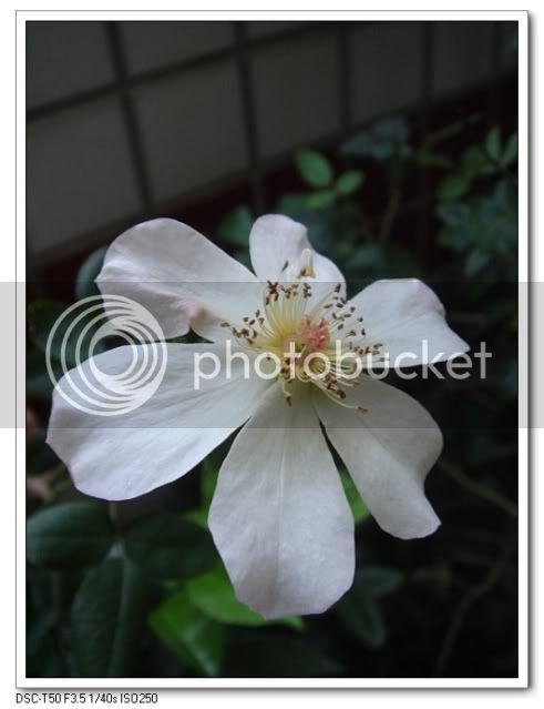 亂亂種的花園 - 頁 3 DSC03408
