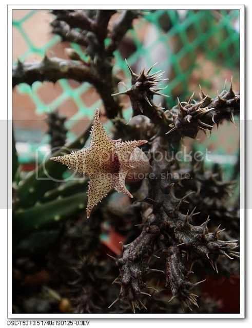 亂亂種的花園 - 頁 3 DSC03430