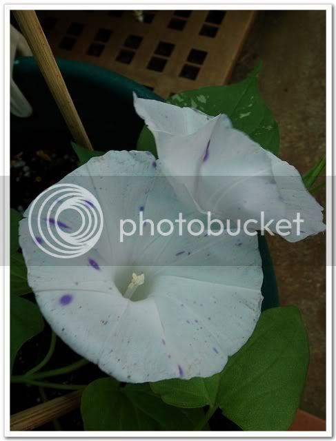亂亂種的花園 - 頁 3 DSC05134