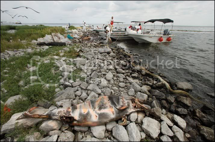 OIL SPILL in the GULF of MEXICO ....... GAIA BLEEDS BLACK!!! 100604_gulf_oil_spill_lg2