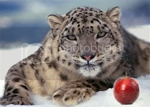 Connecting the DOTS... Snow_LeopardApple