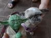 The TIG FOTW Thread: Yoda SDC10190-1