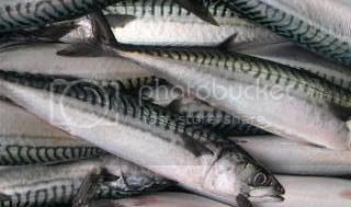 PIKE Baits Mackerel-Dscn1117