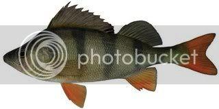 PIKE Baits Redfin-perch