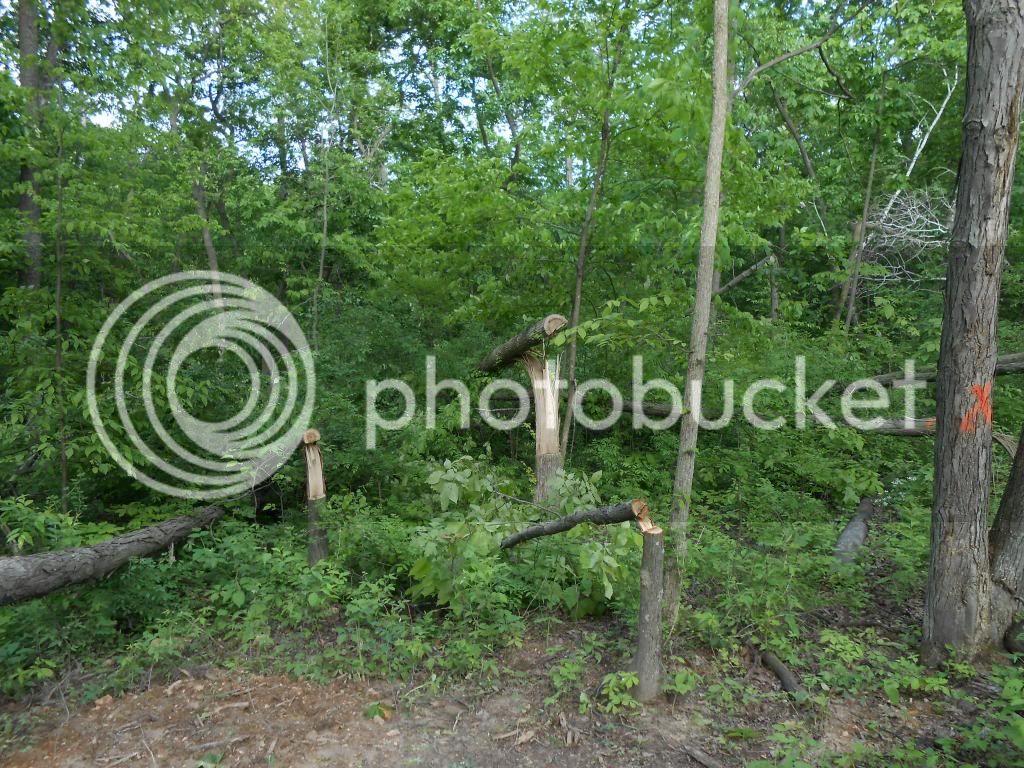 Hinge cutting and water hole pics DSCN1399_zps5e5c30b4