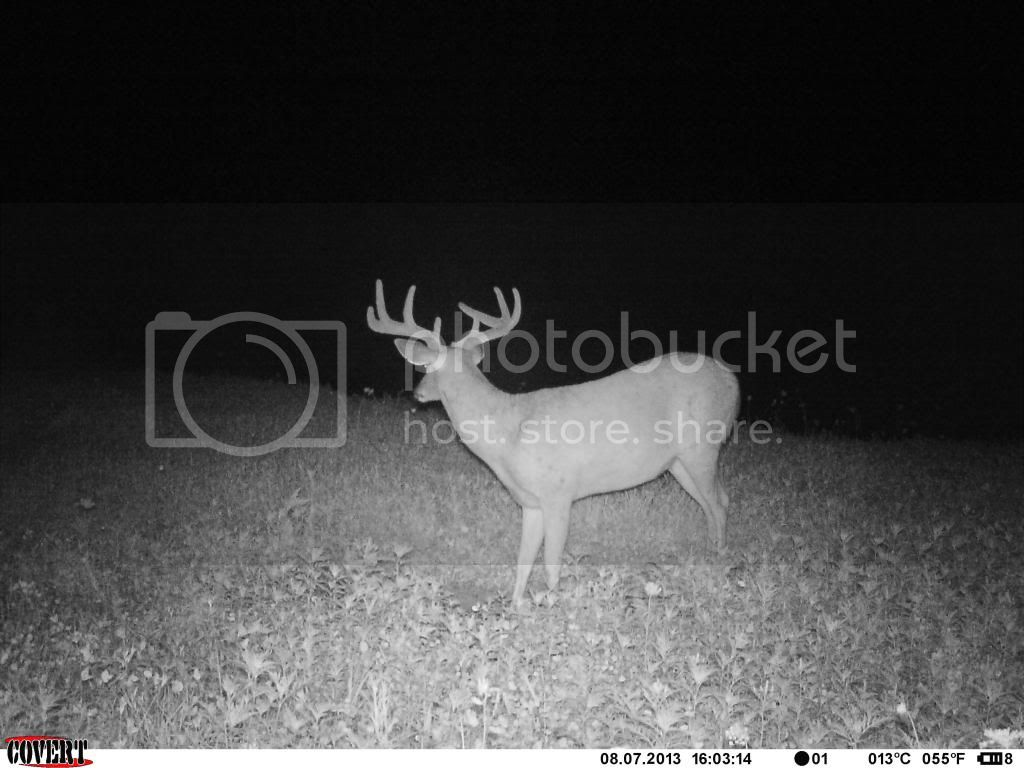 8 pt 22 inch spread 225 lbs field dressed IMAG1900_zps7181fe4a