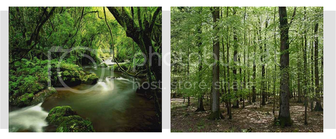 Floresta Belaver Belaver1