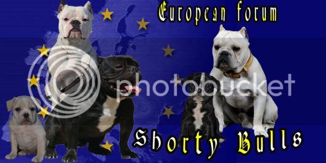 SHORTY BULLS EUROPE