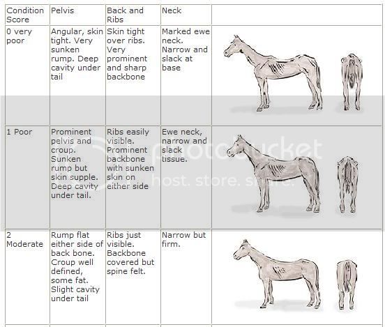 The Ageing Horse Condition1