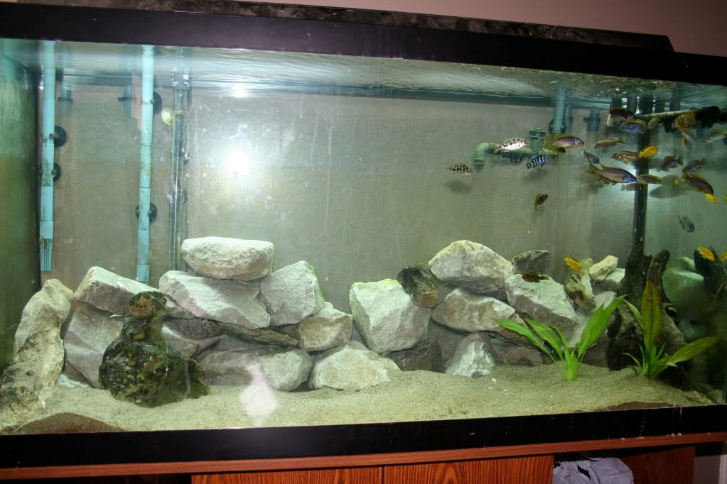 Extreme Makeover: Tank Edition IMG_1260