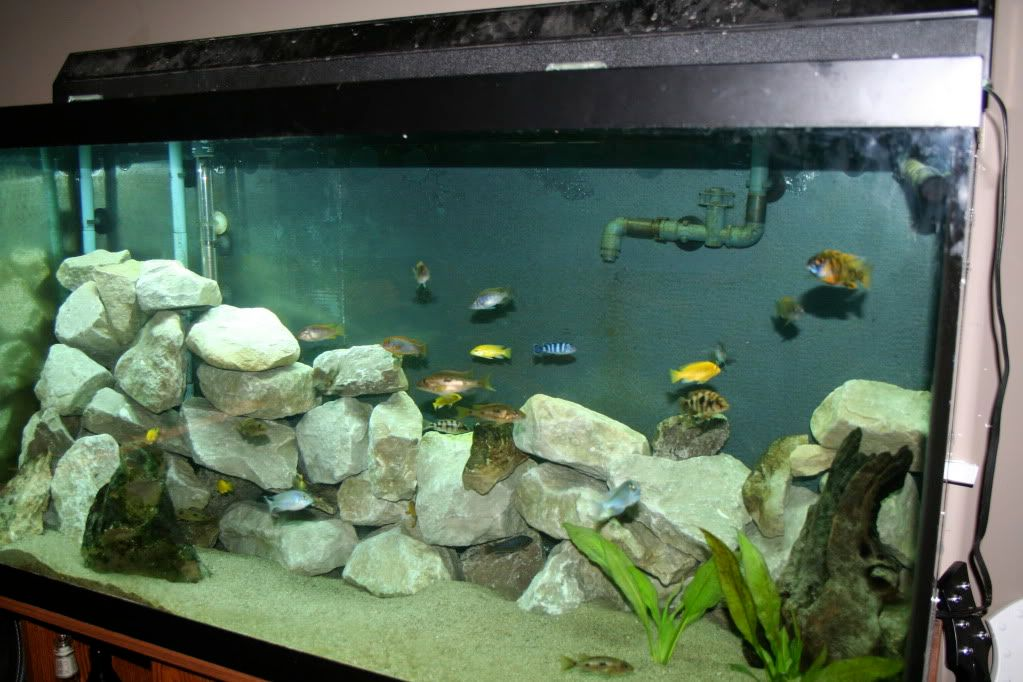 Extreme Makeover: Tank Edition IMG_1272