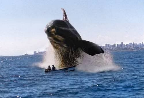 When it's ok to use the 'F' word Whale