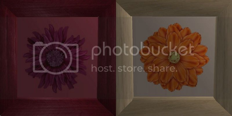 Flowery Picture-Frame - New Mesh by Anidup MaroonOrange