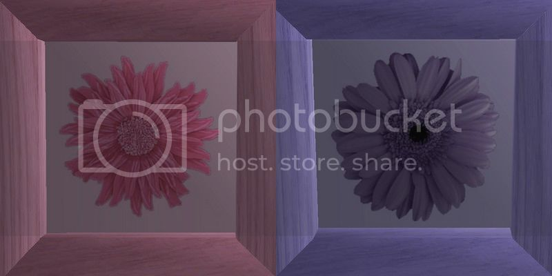 Flowery Picture-Frame - New Mesh by Anidup PinkPurple