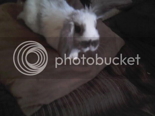 Forum Members Rabbits - Page 3 FreyFrey