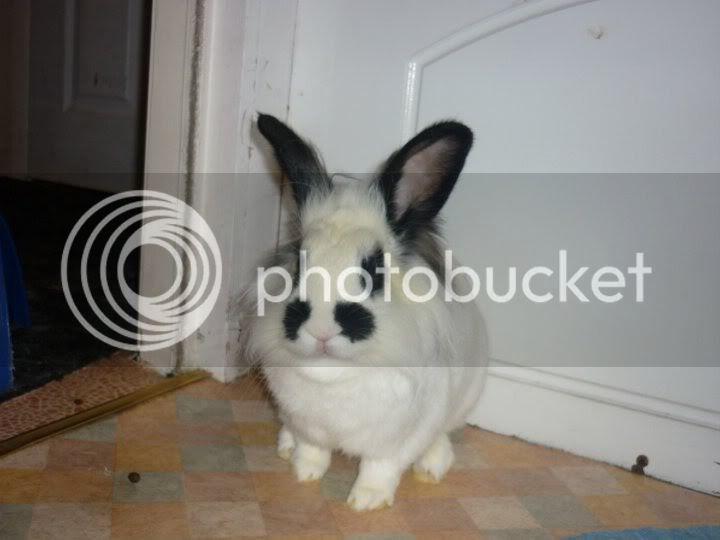 Forum Members Rabbits - Page 3 KujaKuja