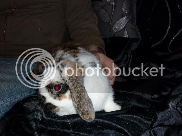 Forum Members Rabbits - Page 3 Lani3