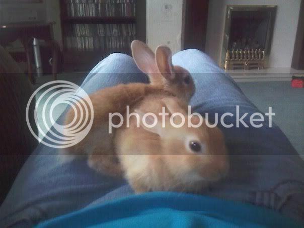 Forum Members Rabbits - Page 3 VivandDaisy
