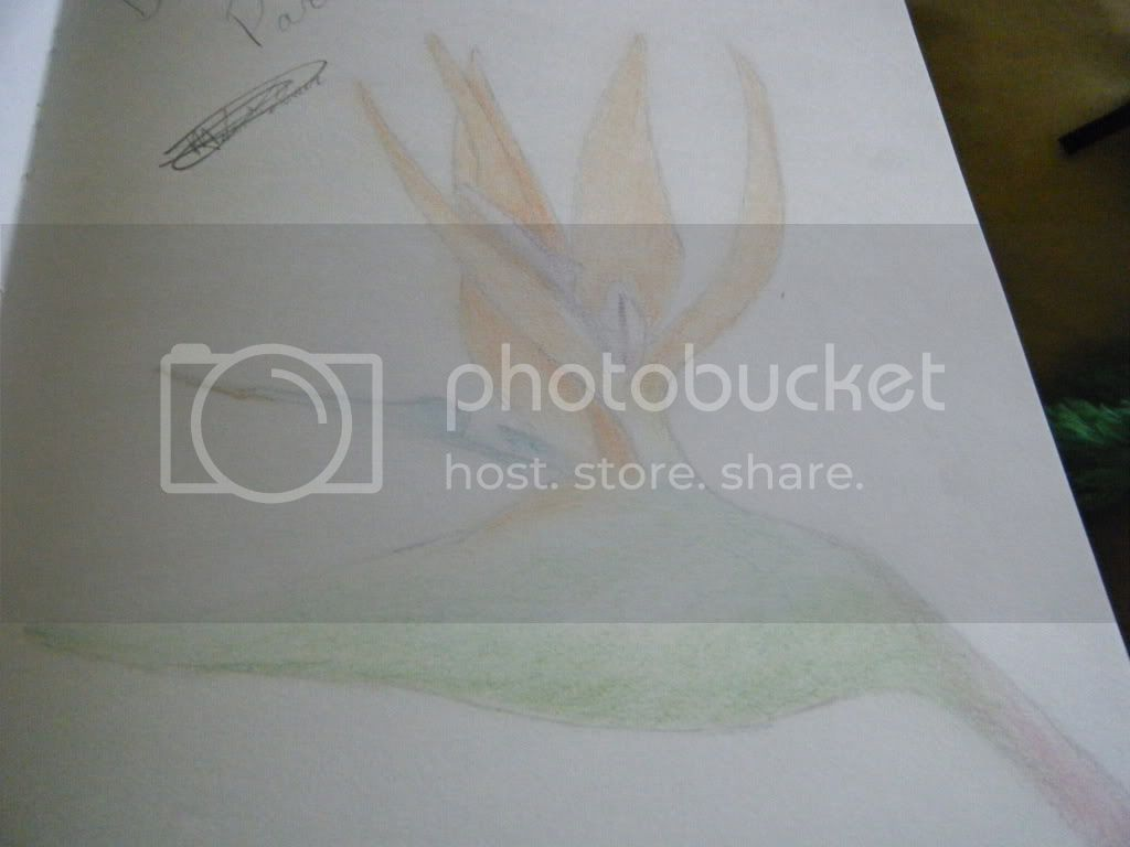 Drawing and other art pieces Sketches009