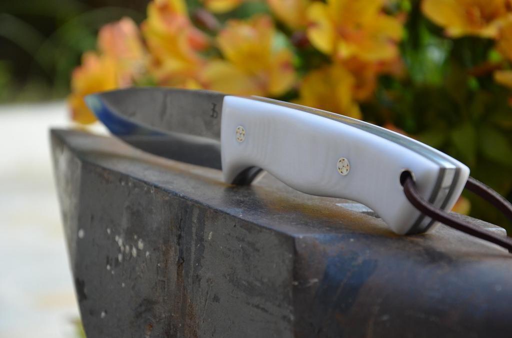 les couteaux du trefle - Page 6 DSC_0847_zps75bf1c32