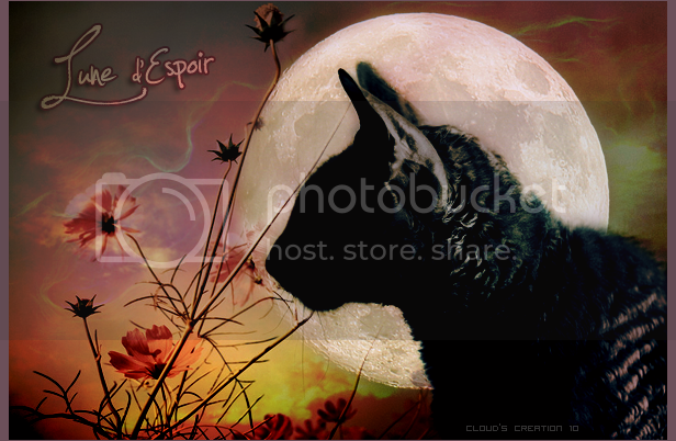 Cloud's Galery ♥ Cat__s_profile_by_Just85