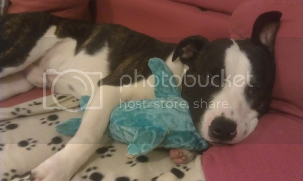 He loves Dougal the dolphin !  IMAG0918_zpsfpctqghm