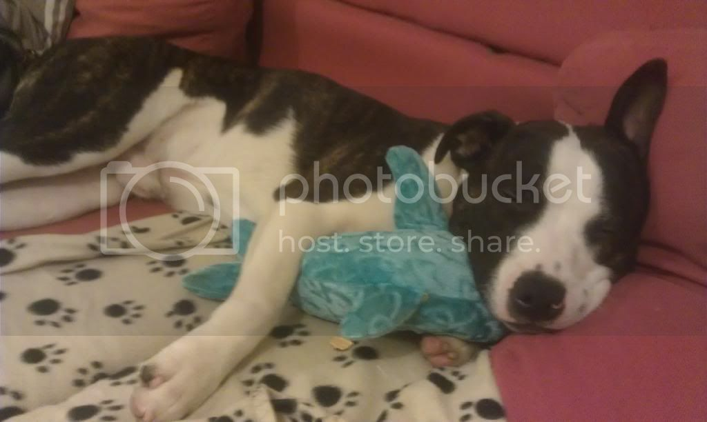 He loves Dougal the dolphin !  IMAG0920_zpsdq9uajyq