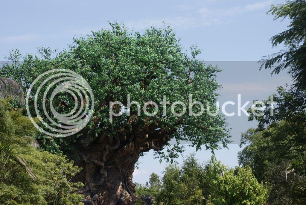 [Walt Disney World Resort] Voyage du 24 juillet au 12 aout 2010 - Page 2 DSC00026