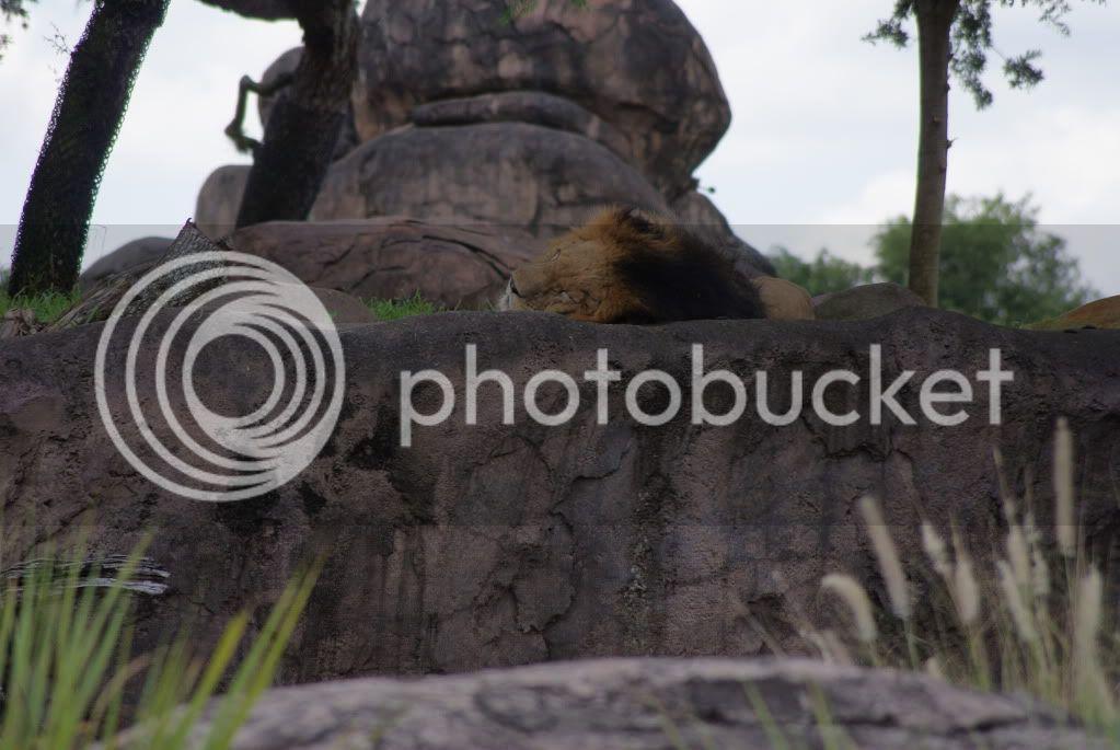 [Walt Disney World Resort] Voyage du 24 juillet au 12 aout 2010 - Page 2 DSC00199