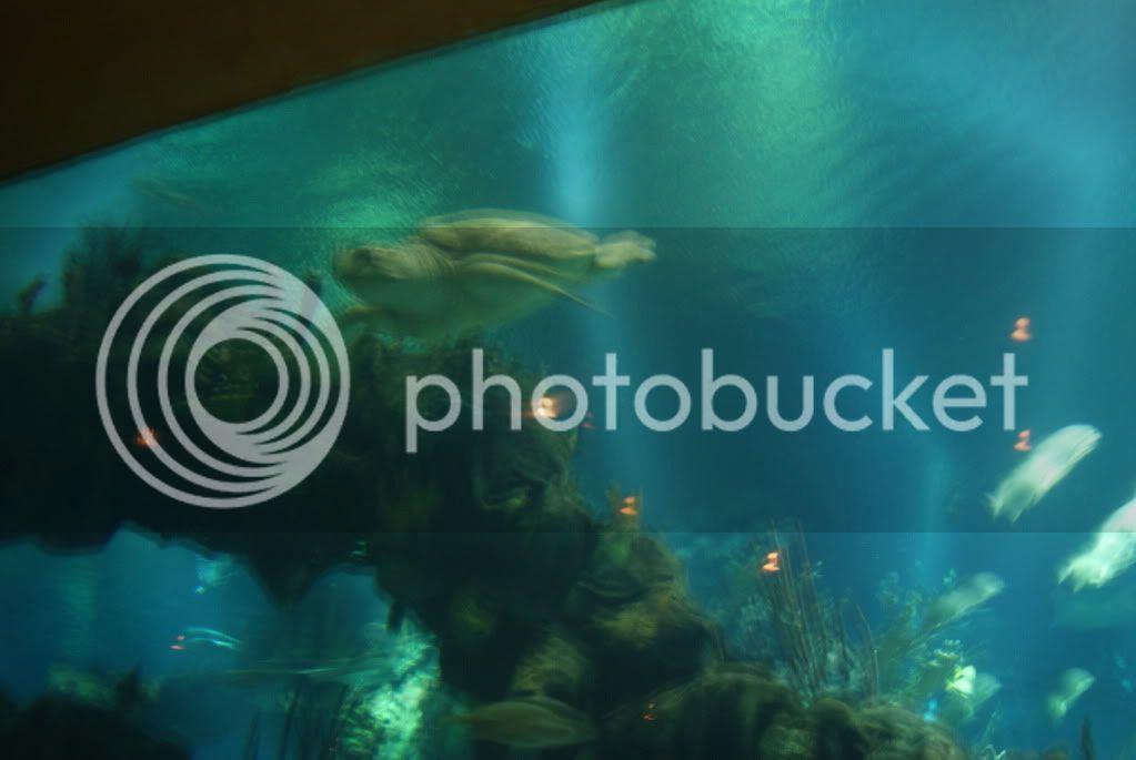[Walt Disney World Resort] Voyage du 24 juillet au 12 aout 2010 - Page 2 DSC00775