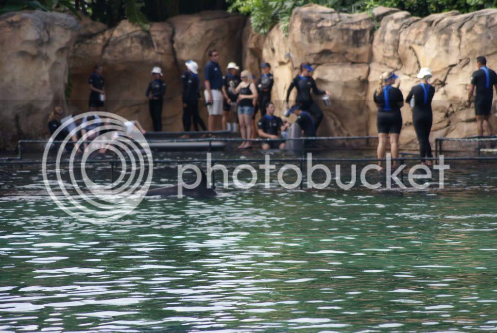 [Walt Disney World Resort] Voyage du 24 juillet au 12 aout 2010 DSC03264