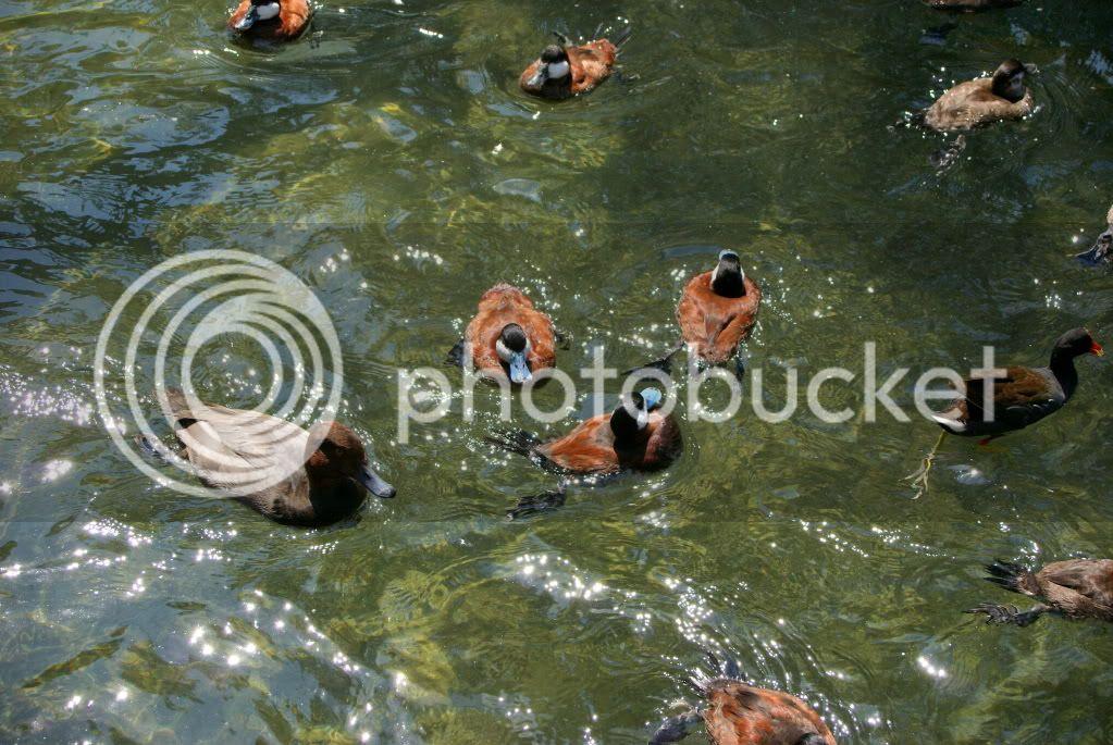 [Walt Disney World Resort] Voyage du 24 juillet au 12 aout 2010 DSC03680