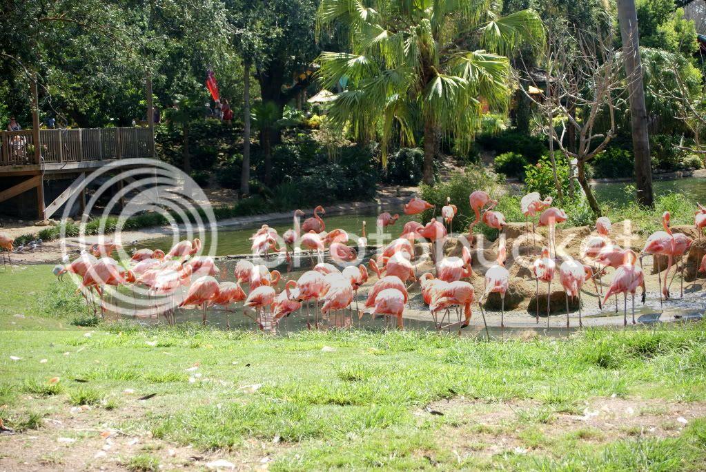 [Walt Disney World Resort] Voyage du 24 juillet au 12 aout 2010 DSC03685