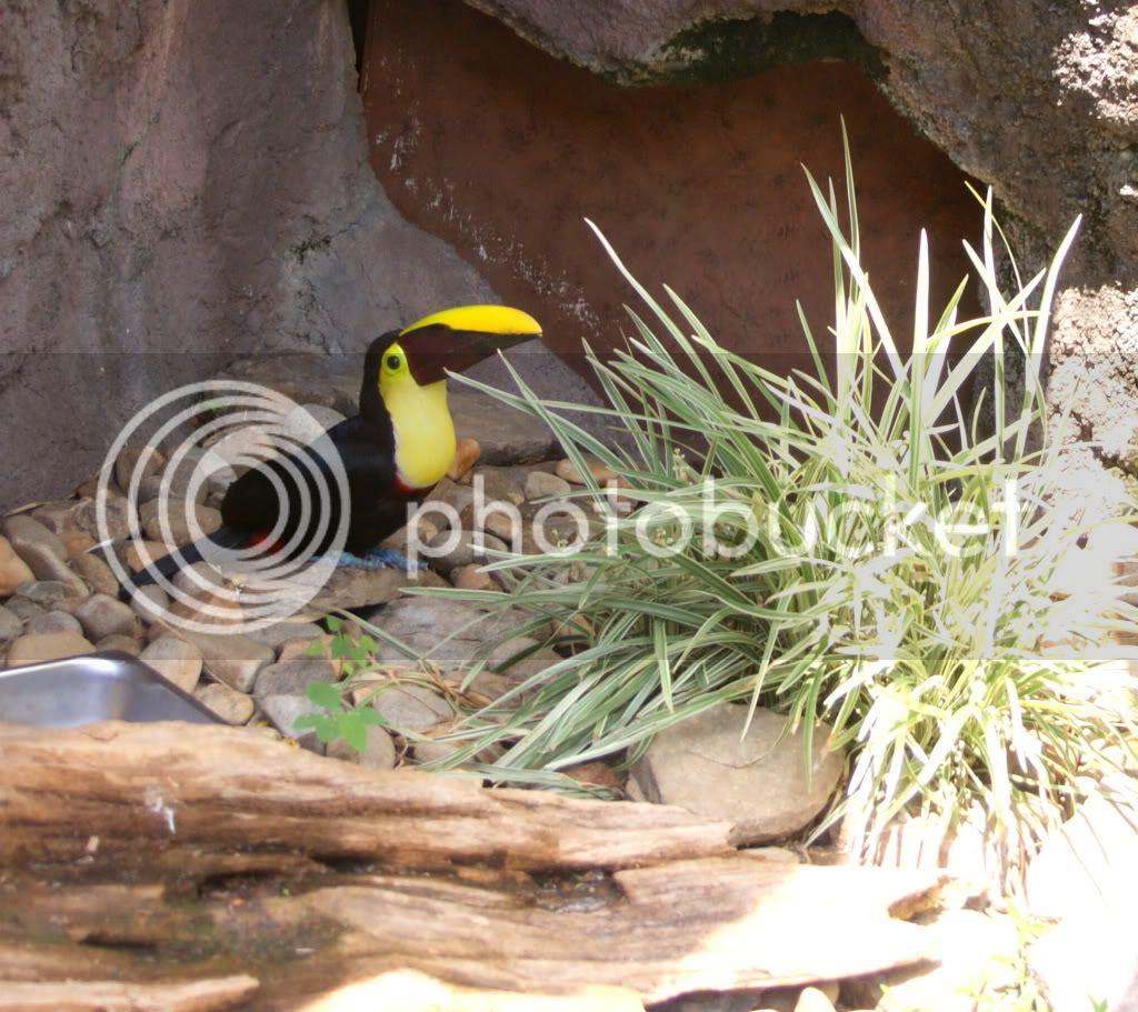 [Walt Disney World Resort] Voyage du 24 juillet au 12 aout 2010 DSC03731