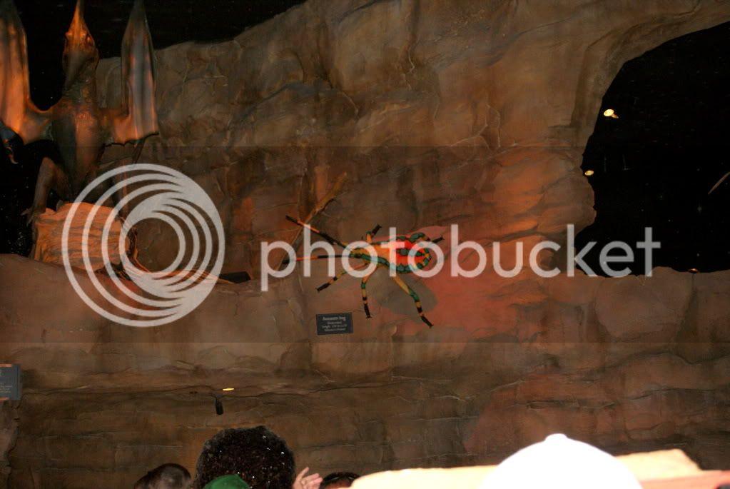 [Walt Disney World Resort] Voyage du 24 juillet au 12 aout 2010 DSC04208