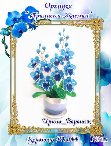 """Галерея выпускников: Орхидея """"Принцесса Жасмин"""" 63998ae2387446ed7e8a883bf555cb5e"""
