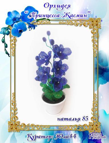 "Галерея выпускников: Орхидея ""Принцесса Жасмин"" 049d093c2b991ed22d0ba33a0863dd99"