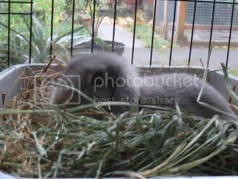Forum Members Rabbits CL4
