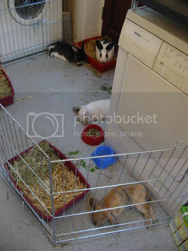 Forum Members Rabbits Bond12
