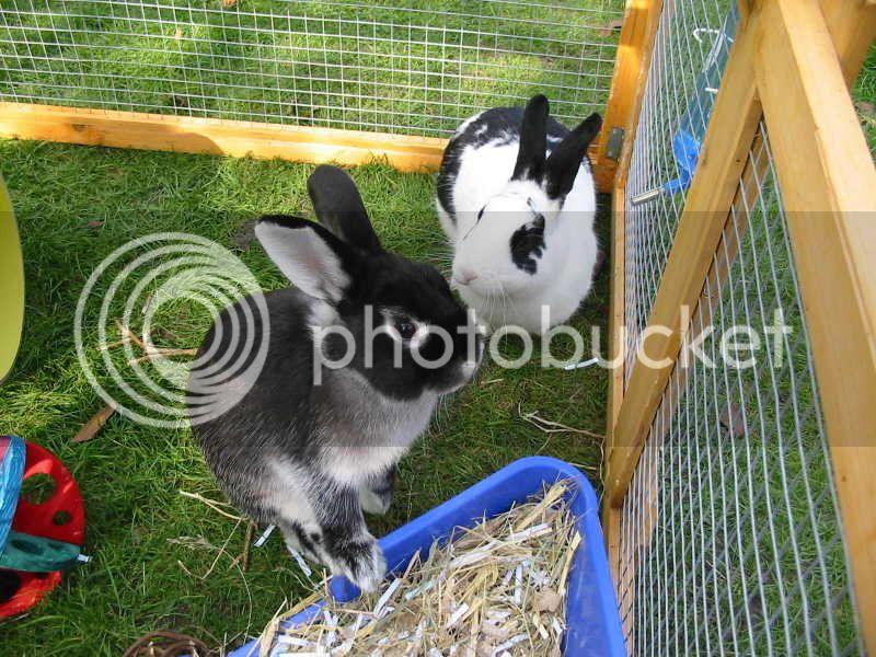 Forum Members Rabbits Pensnoop1
