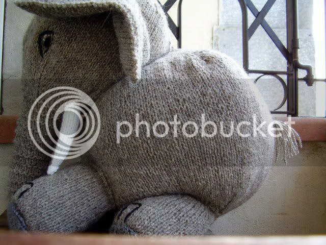 Elefante in maglia P6280155