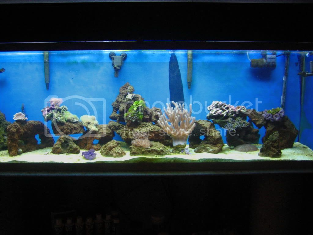 Check this out Newtank