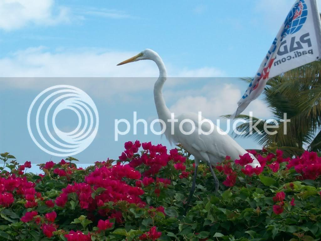 Turks & Caicos Pics 100_0462