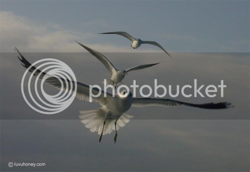 கவலை மறக்கும் காட்சிகள் அழகிய பறவைகள் சில.. - Page 2 Birds-fly
