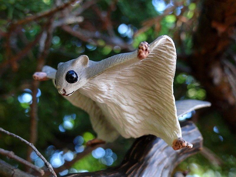 A small walkaround of Eiko's flying squirrel. Eikoh%20Flying%20squirrel%2001